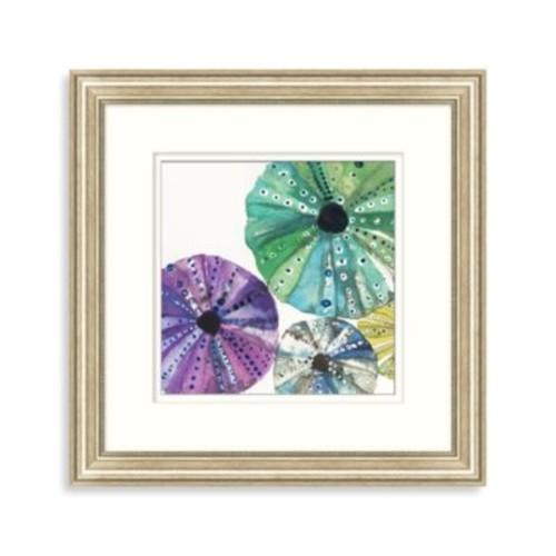 Transparent Sea Urchin 1 Framed Art