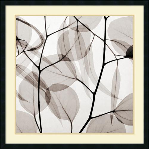 Framed Art Print 'Eucalyptus Leaves (Positive)' by Steven N. Meyers 34 x 34-inch