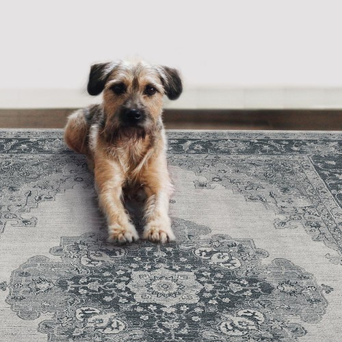Ruggable Washable Parisa Grey 5 ft. x 7 ft. Stain Resistant Area Rug