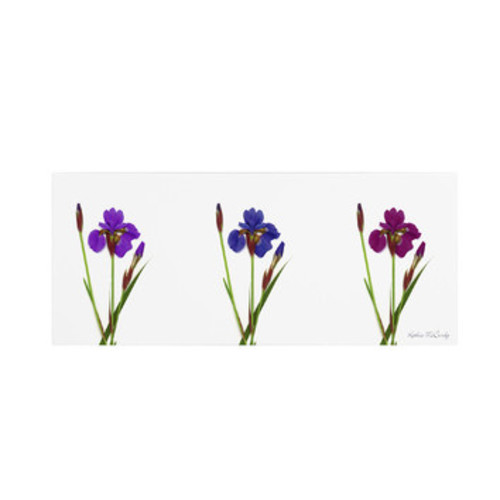 'Siberian Iris Triptych' by Kathie McCurdy Painting Print on Wrapped Canvas