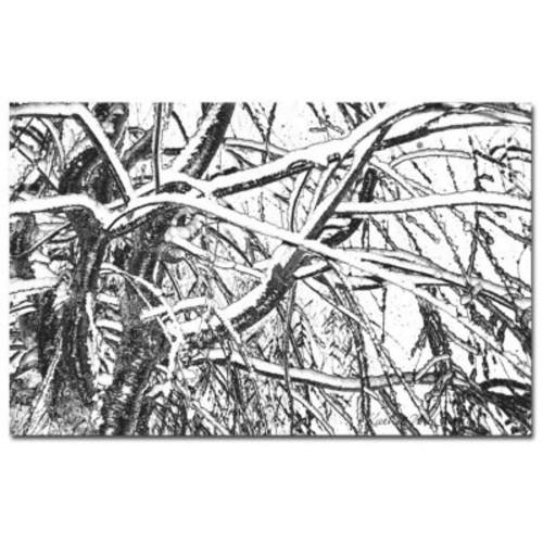 Trademark Fine Art Kathie McCurdy 'Follow Me' Canvas Art