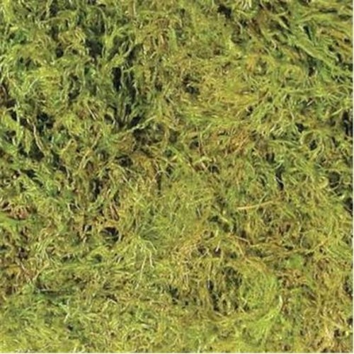 Reptile Outpost Green Moss Bedding (8 Quart)