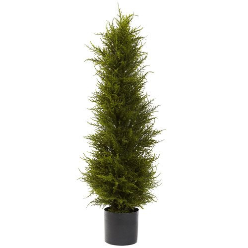 42 Cedar Tree