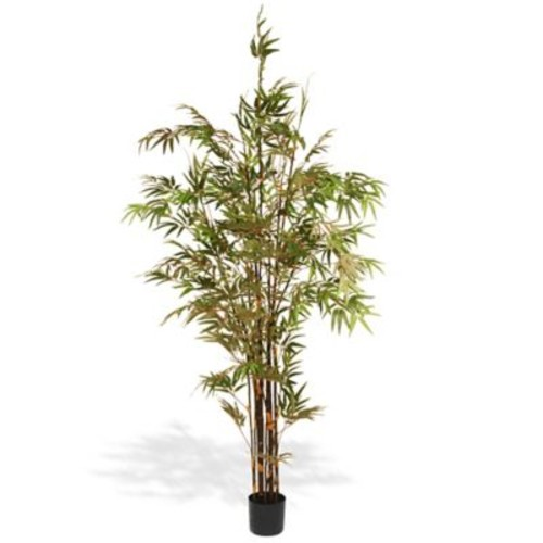 National Tree Co. Japanese Bamboo Tree in Pot
