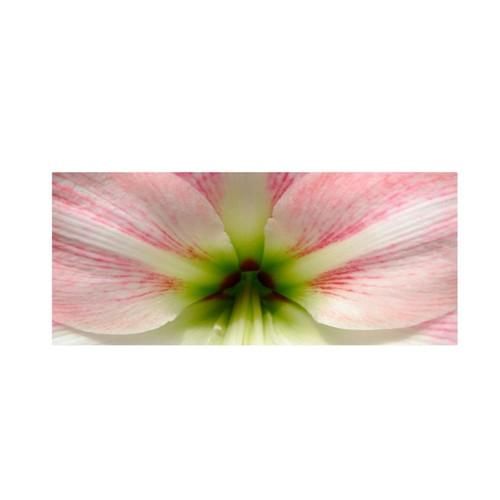 Trademark Fine Art 'Amazing Amaryllis' 24