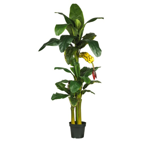 6ft Triple Stalk Banana Silk Tree