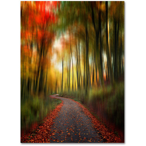The Lost Path by Philippe Sainte-Laudy, 14 by 19-Inch Canvas Wall Art [14 by 19-Inch]