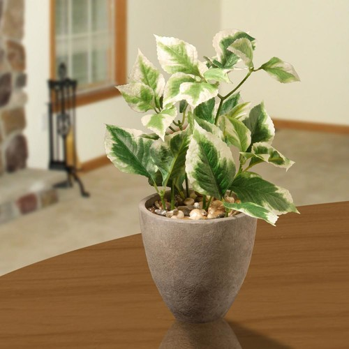 National Tree Company 11.8 in. Balm Plant in Pot