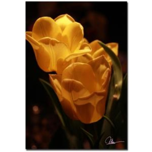 Trademark Fine Art 22 in. x 32 in. Two Yellow Tulips Canvas Art