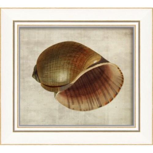 The Artwork Factory Seashell Framed Graphic Art