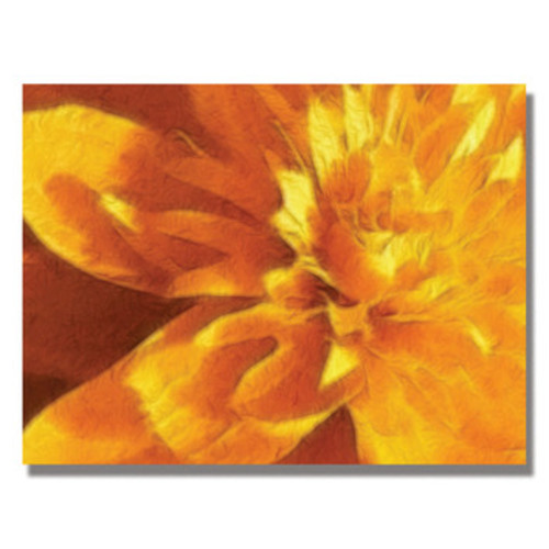 'Carmel Yellow Mum' by Kathie McCurdy Framed Graphic Art on Wrapped Canvas
