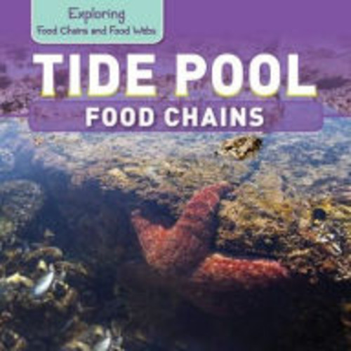 Tide Pool Food Chains