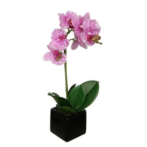 House of Silk Flowers Artificial Baby Cube Ceramic Orchid Flowers in Pot (Set of 2); White/Purple