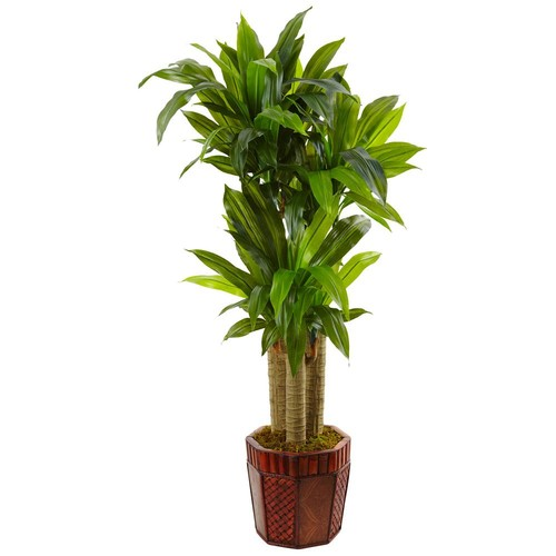 Nearly Natural Indoor 54 in. H Cornstalk Dracaena in Wooden Planter