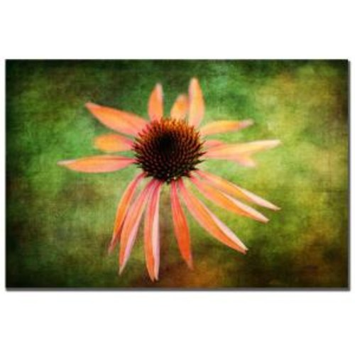 Trademark Fine Art 32 in. x 22 in. Textured Golden Coneflower Canvas Art