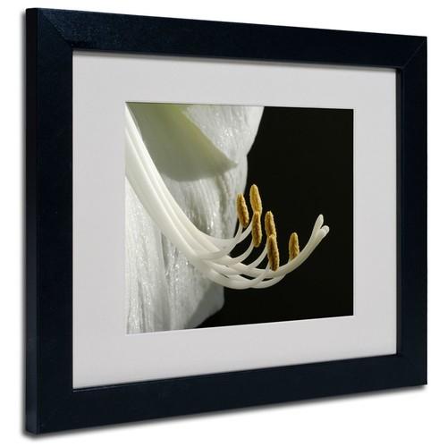 Trademark Fine Art Kurt Shaffer 'Intimate Amaryllis' Matted Art Black Frame 11x14 Inches