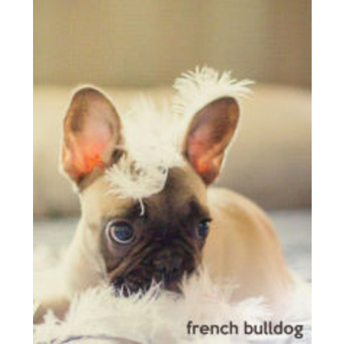 French Bulldog: A Gift Journal for People who Love Dogs: French Bulldog Puppy Edition