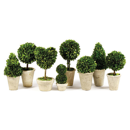 Asst. of 8 Lush Preserved Topiaries, Green/Gray