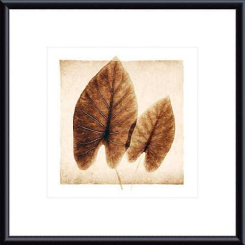 'Taro Leaves' by Michael Mandolfo Framed Photographic Print [Frame Color : Black]