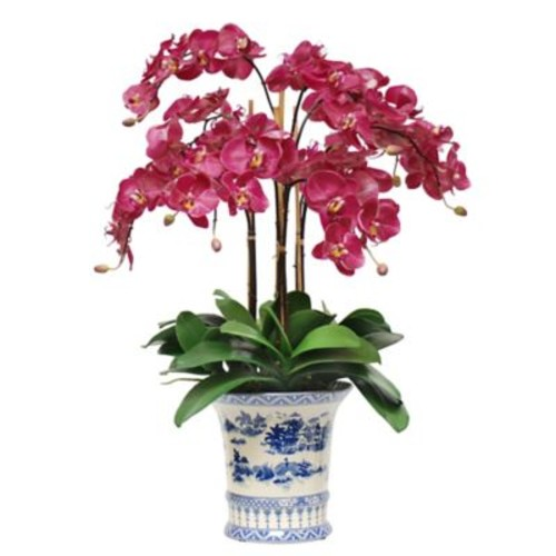 Bloomsbury Market Phalaenopsis Plant in China Pot
