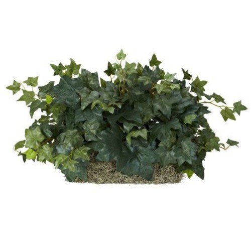 Ivy Ledge Plant by Nearly Natural