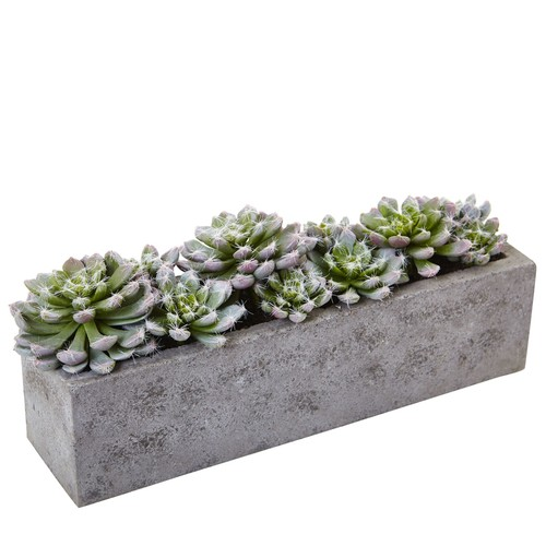 Succulent Garden in Concrete Planter by NearlyNatural