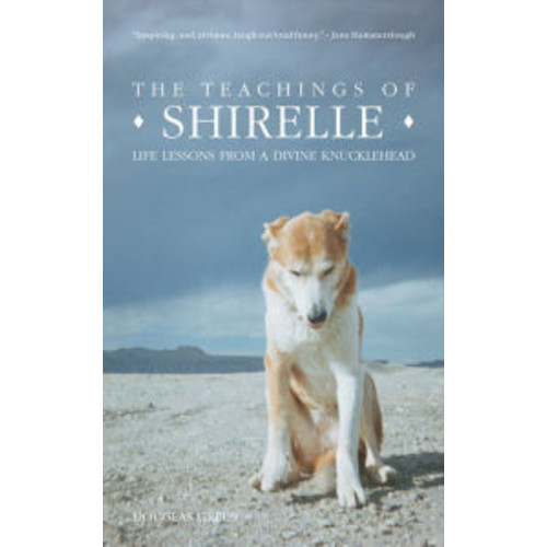 The Teachings of Shirelle: Life Lessons from a Divine Knucklehead