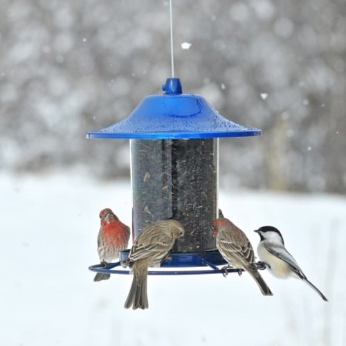 Perky-Pet Blue Sparkle Wild Bird 2 lb. Metal Panorama Seed Feeder 1(312B)