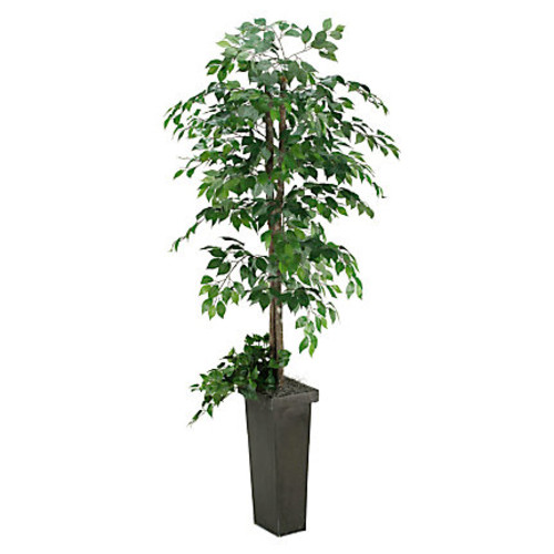 Realspace 7' Green Ficus Tree With Metal Planter