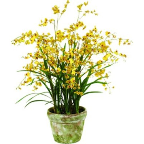 Jane Seymour Botanicals Oncidium Orchid Floor Plant in Pot