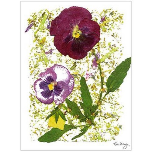 Plum Pansy by Kathie McCurdy, 18x24-Inch Canvas Wall Art