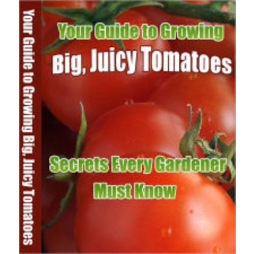Your Guide to Growing Big Juicy Tomatoes: Secrets Every Gardener Must Know.
