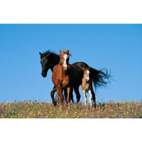 National Geographic 48 in. x 72 in. Horse Family Wall Mural