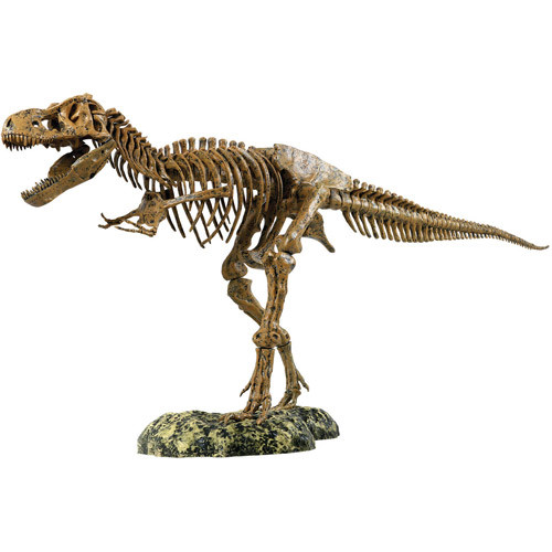 Edu-Toys Science Tech T-Rex Skeleton 36