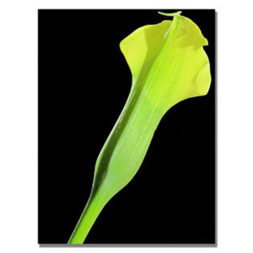 Trademark Global 'Yellow Calla' by Kathie McCurdy Graphic Art on Canvas Size: 24'' H x 18'' W x 2'' D