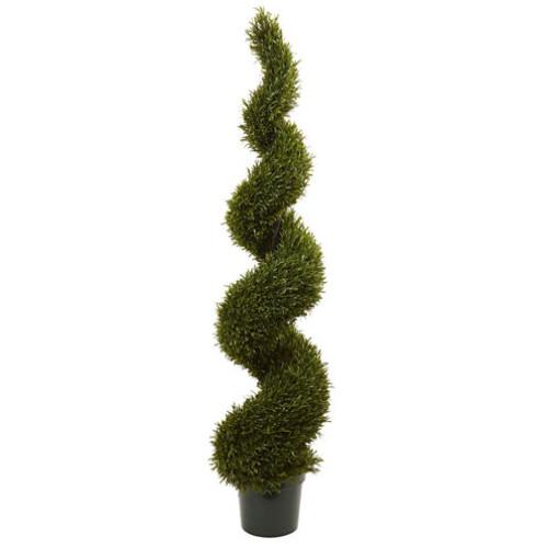 6' Rosemary Spiral Tree Indoor/Outdoor