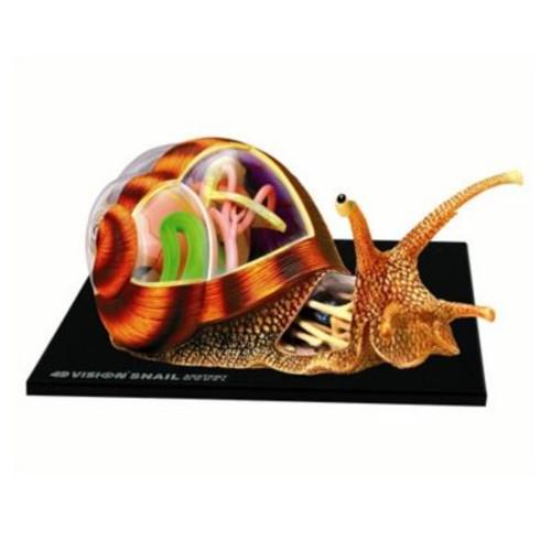 4D Master Vision Snail Anatomy Model