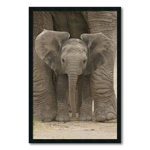 Big Ears 'Baby Elephant' Gel-textured Art Print
