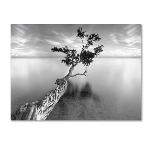 Trademark Global Moises Levy 'Water Tree XIII' Canvas Art [Overall Dimensions : 14x19]