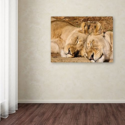 National Zoo-Lions by CATeyes, 14 by 19-Inch Canvas Wall Art [14 by 19-Inch]