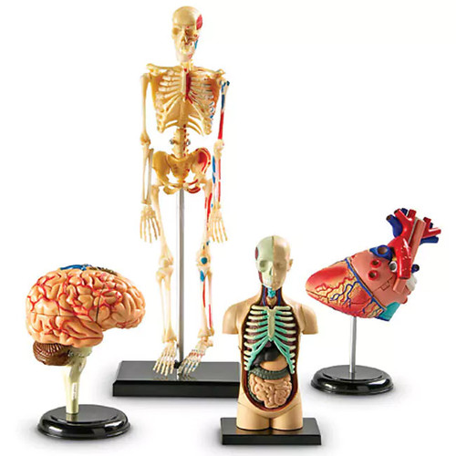 Learning Resources Learning & Educational Toys Anatomy Models Bundle Set