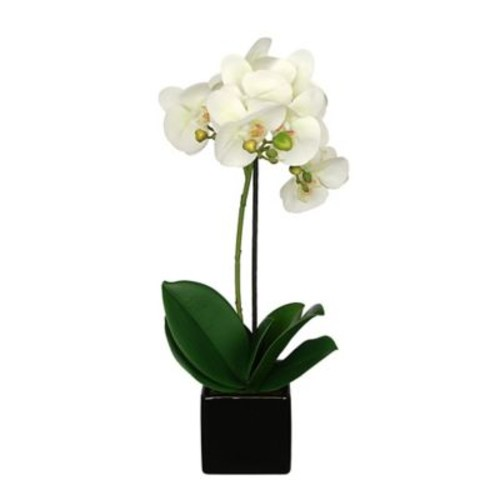House of Silk Flowers Artificial Baby Cube Ceramic Orchid Flowers in Pot (Set of 2); Pearl White