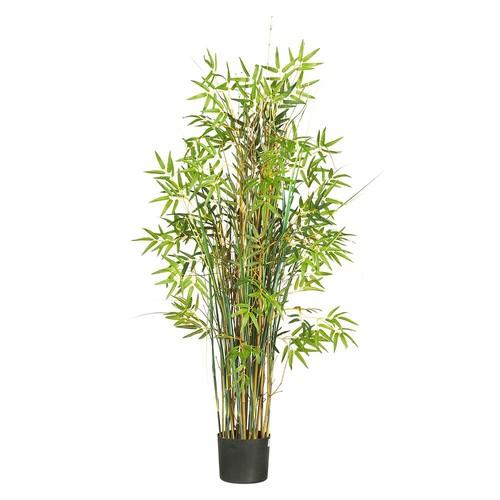 5' Bamboo Grass Silk Plant