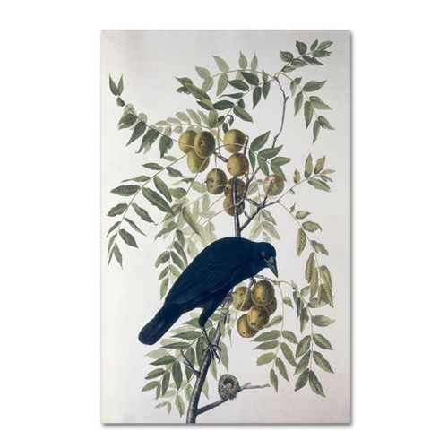 Trademark Fine Art 'American Crow' 14