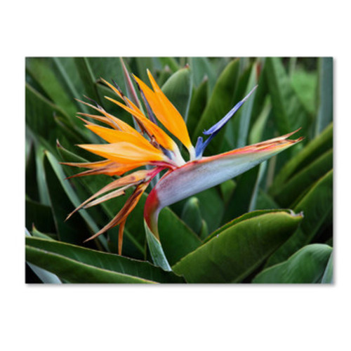 'Bird of Paradise' by Pierre Leclerc Photographic Print on Canvas