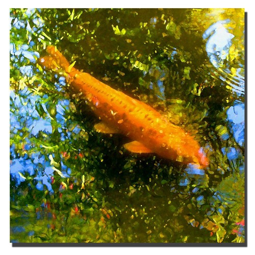 Trademark Global Amy Vangsgard 'Koi Fish' Canvas Art [Overall Dimensions : 18x18]