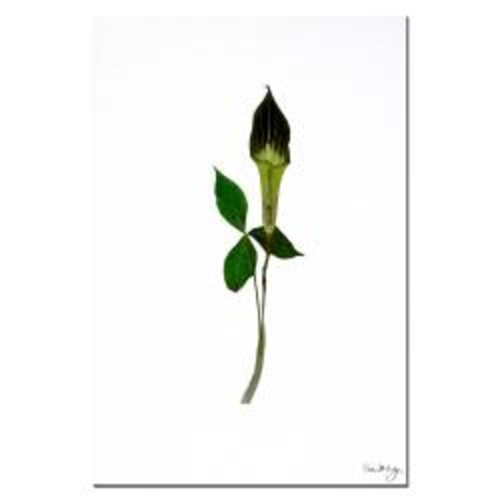 Kathie McCurdy 'Jack-in-the-Pulpit' Gallery-wrapped Canvas