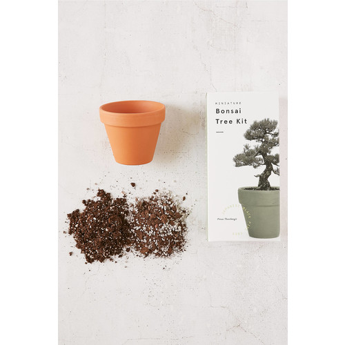 Miniature Indoor Bonsai Tree [REGULAR]