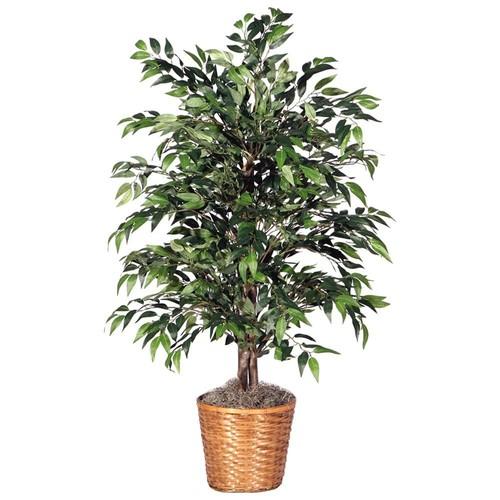 Green Smilax 4-foot Bush