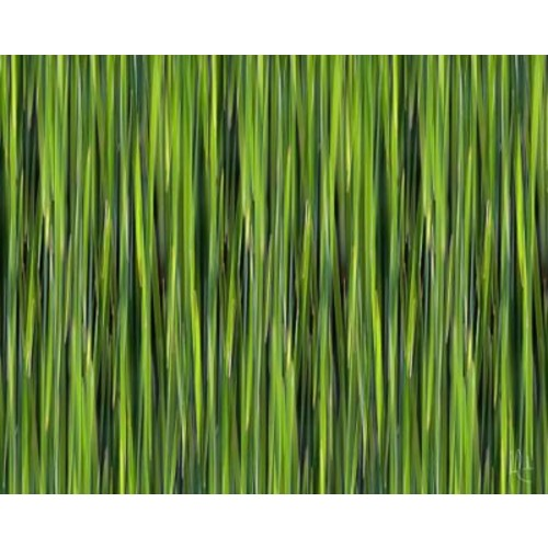 Carlyle Fine Art Nature Blades by Jordan Carlyle Graphic Art; 54'' x 72''